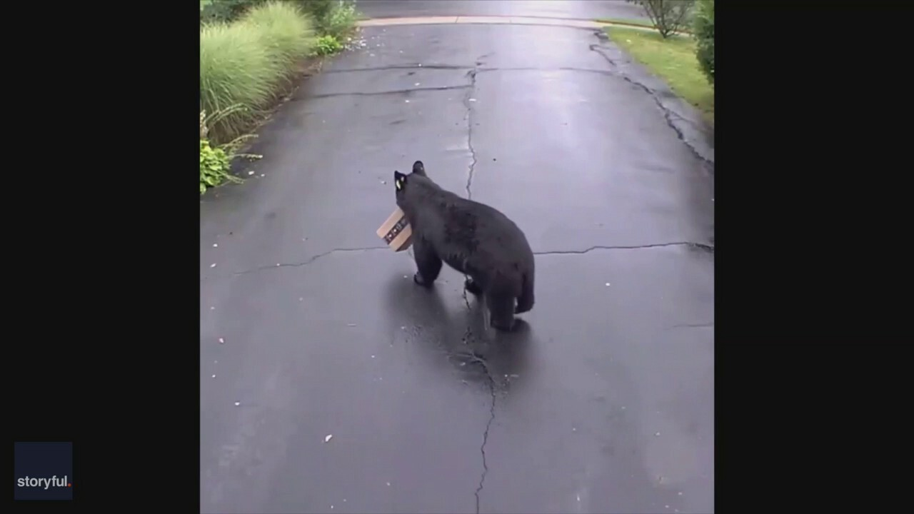 Bear caught stealing Amazon package in Connecticut