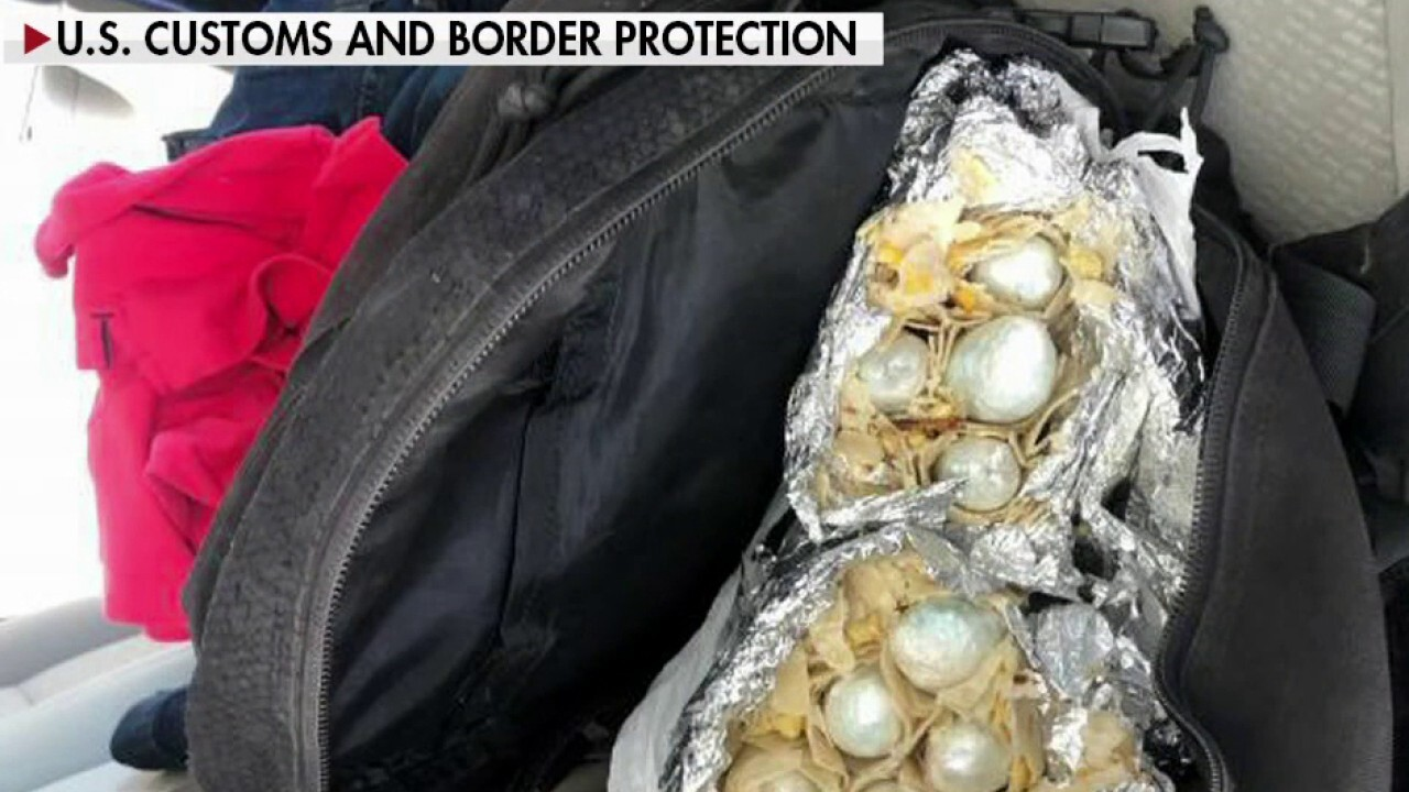 Border Patrol warns of surge in drug smuggling at southern border