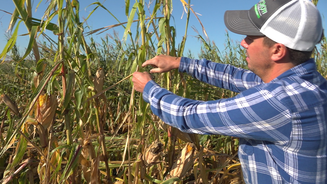 Iowa farmers hoping for some profit after devastating storm