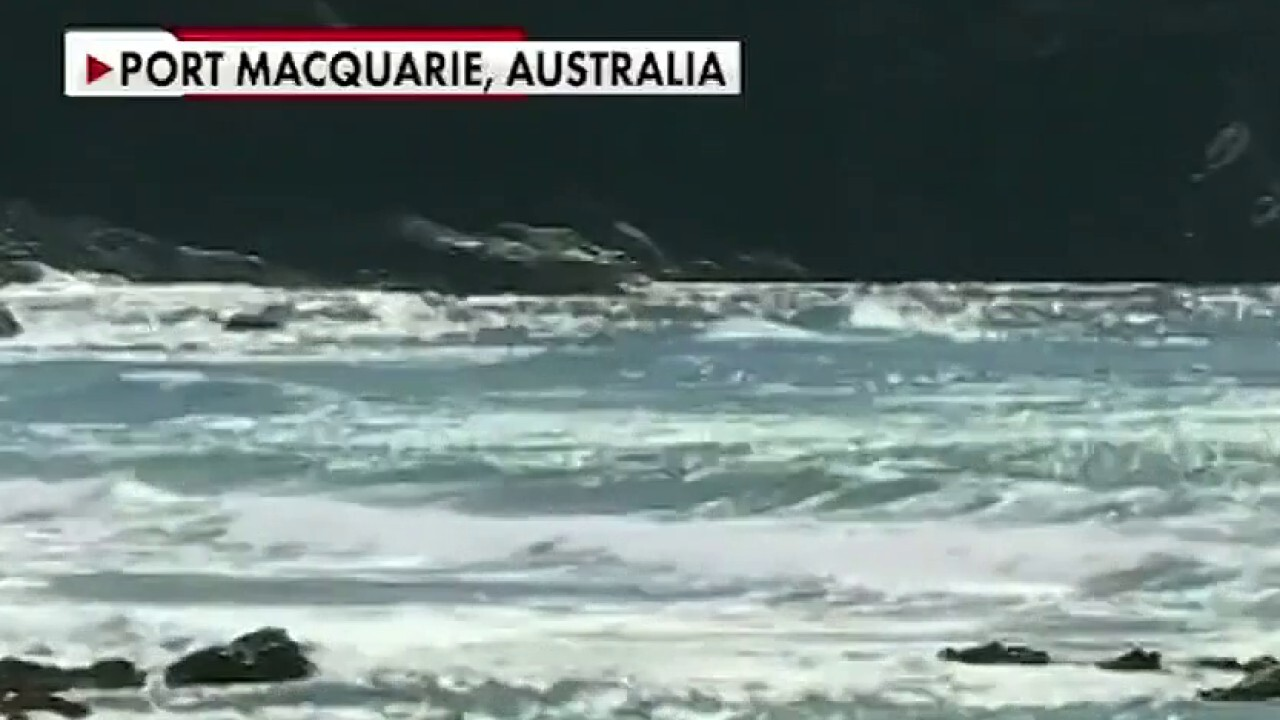 Man punches great white shark to save wife in Australia