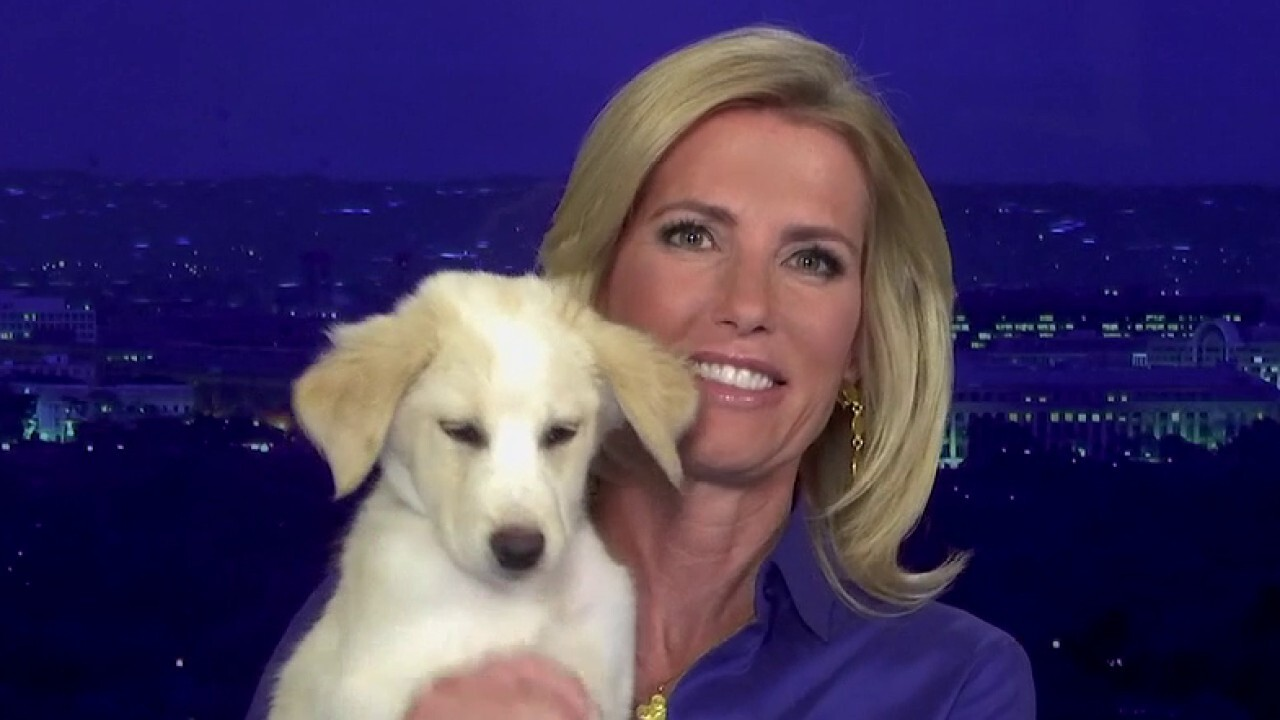 Host Laura Ingraham introduces Zoey the dog from Unconditional Love Pet Rescue in Arkansas