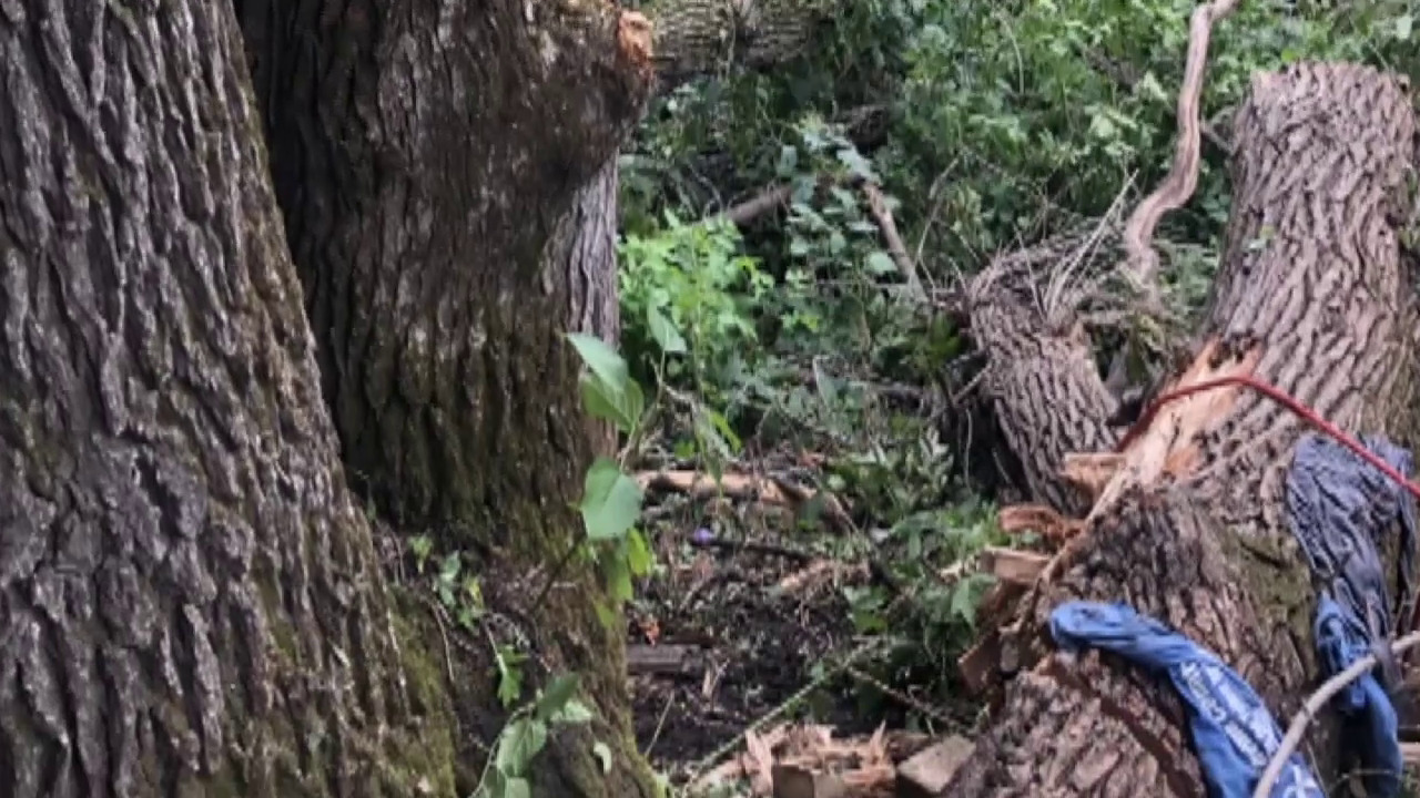 59-year-old man survives for 4 days trapped under a fallen tree