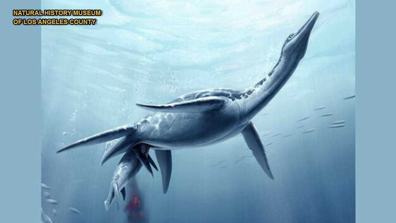 Fossil of 'real-life Loch Ness Monster' found in Antarctica