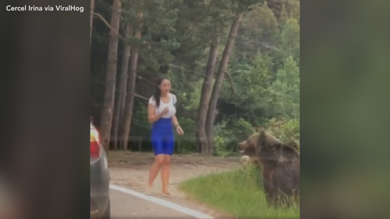 Bear filmed lunging at woman who got too close to take a picture