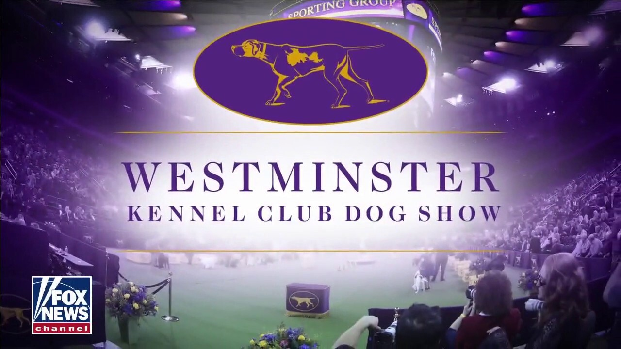 Westminster Kennel Club Dog Show moves to Tarrytown, NY