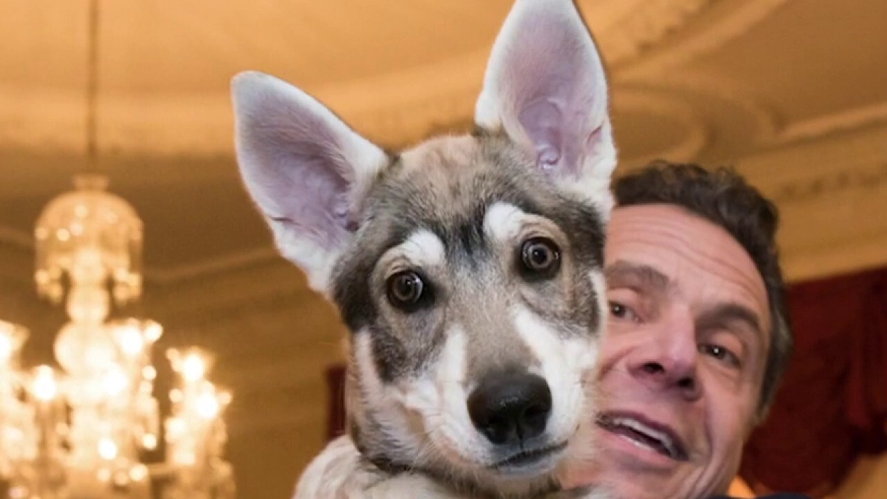 Cuomo reportedly wants to leave his dog behind