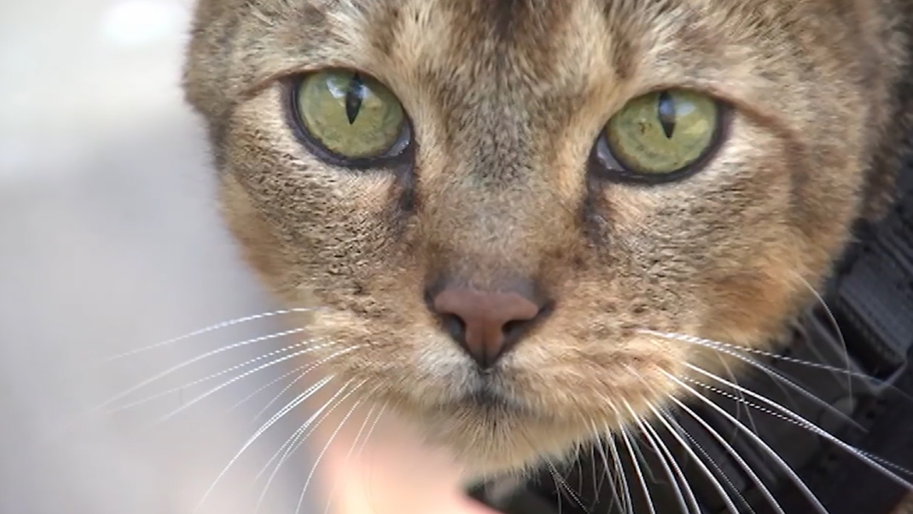 ASPCA works to find adoptive homes for tens of thousands of animals in foster care