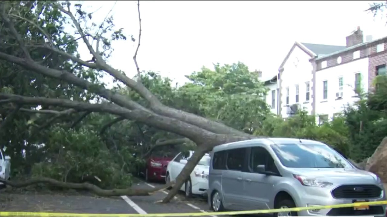 Isaias' powerful winds topple 2,000 trees in NYC