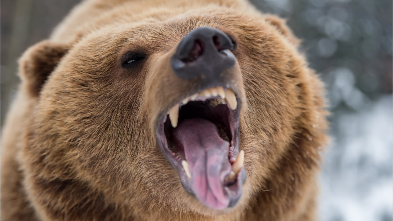 What to do when a bear attacks
