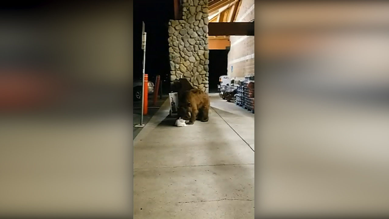 Bear wanders into Lake Tahoe grocery store, leaves with bag of tortilla chips