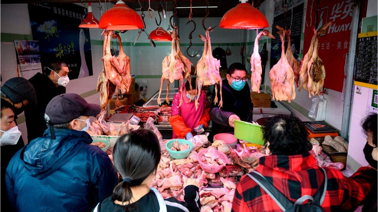 China promotes bear bile as coronavirus cure