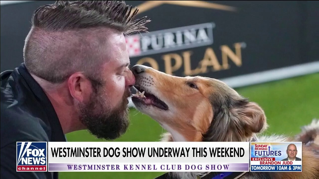 Westminster Kennel Club Dog Show underway this weekend in New York with 2,500 dogs