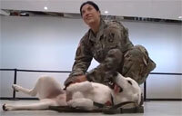 Soldier Reunites with Dog She Saved in Iraq