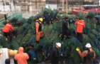 Crew of Mackinaw Offloads 1200 Christmas Trees in Chicago