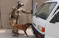 Explosive Detection Dogs in Action