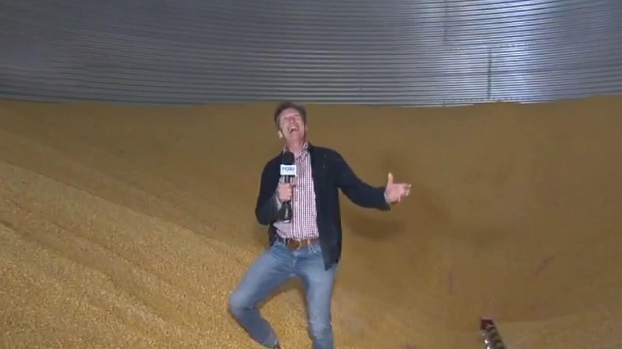 Corn farmers set to cash in on grain rebound