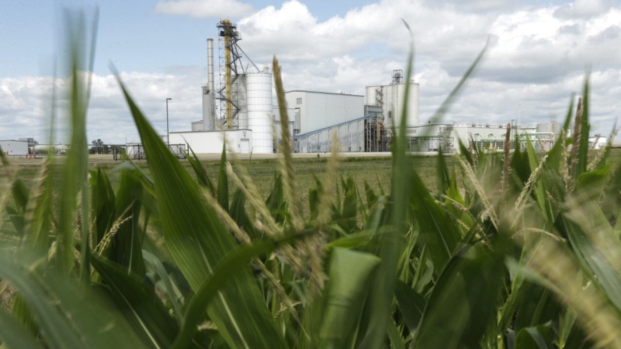 Corn farmers cashing in as demand for gas jumps