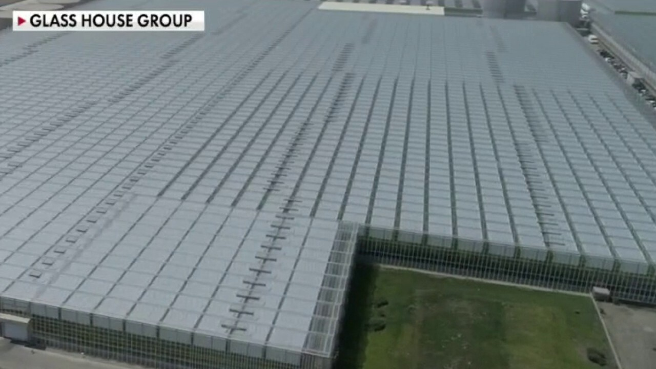 Cannabis grower Glass House to go public, builds largest greenhouse in California