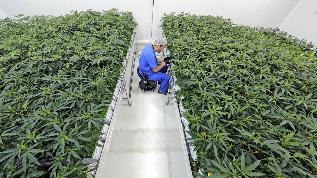 Canopy Growth CEO: Federal marijuana legalization could boost state economies