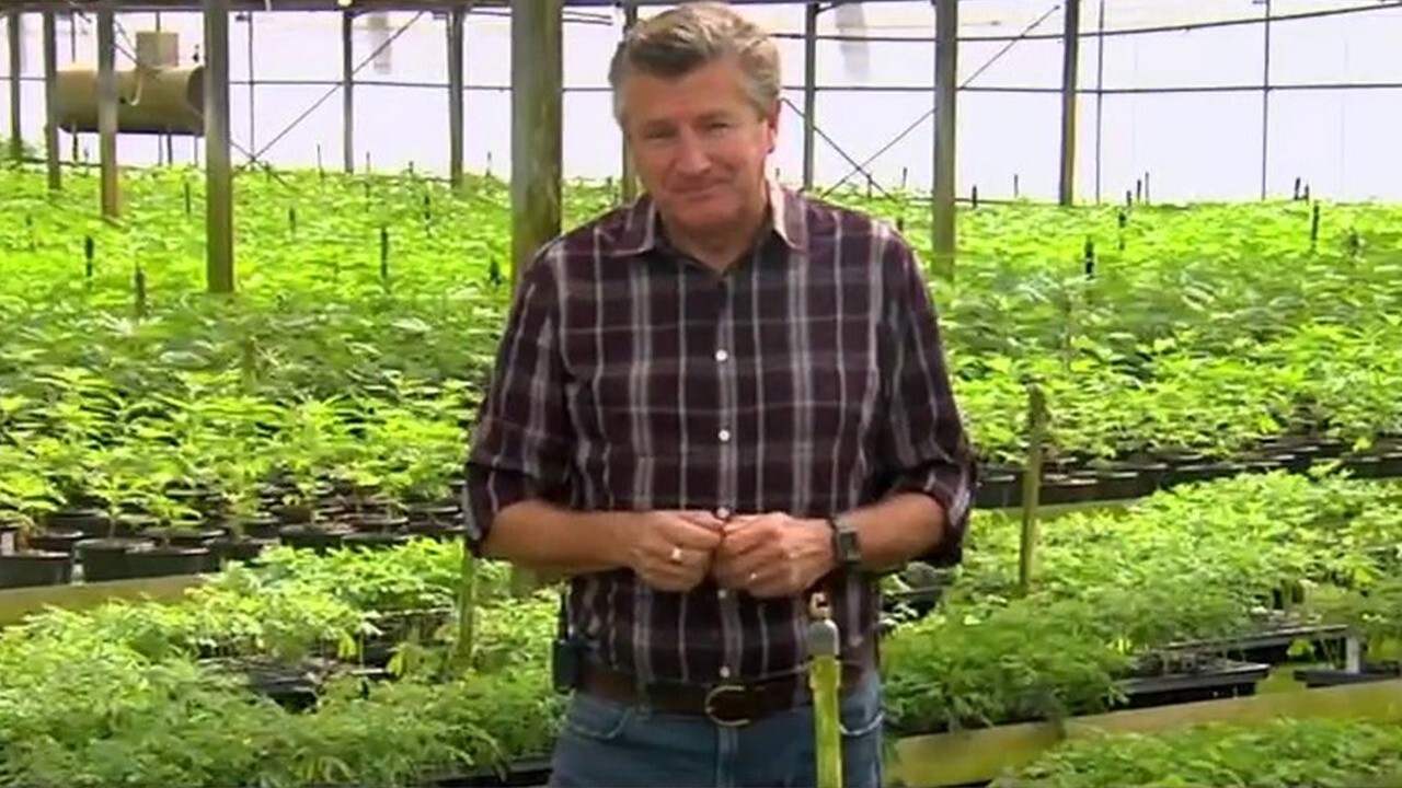 Florida hemp market could surge to $30B industry